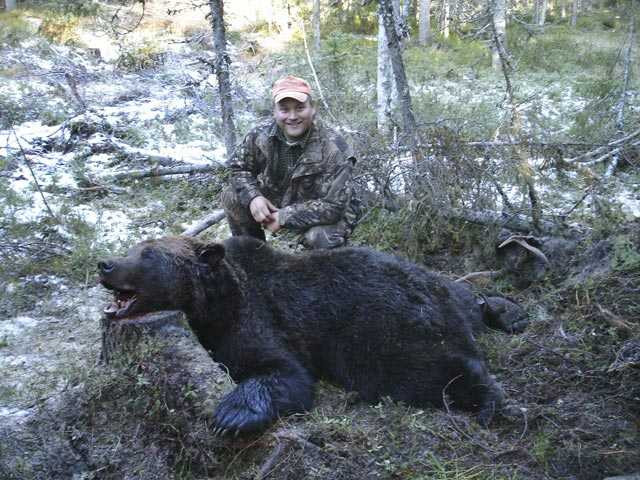 Mr Andrew Sjolund And Swedish Brown Bear Taken With 358 Norma Magnum And Woodleigh 275 Grain Weldcore Protected Point Soft Nose Bullet