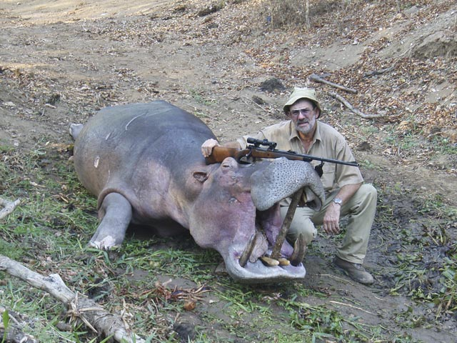 Mr Dave Manley Australia And Hippo Taken With Whitworth Express 458 Win Mag And Woodleigh 458 480gr Full Metal Jacket Bullet